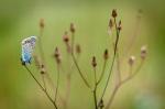 Mariposas-por-la-vida
